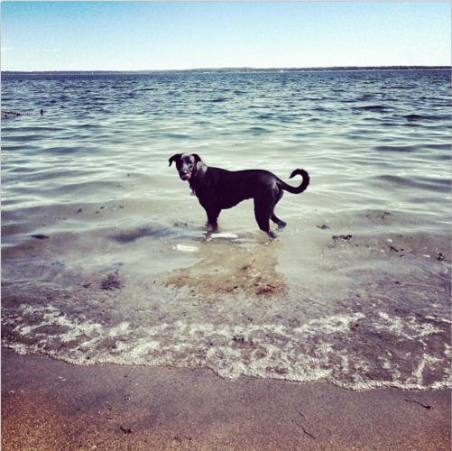Oscar, Bradley's dog