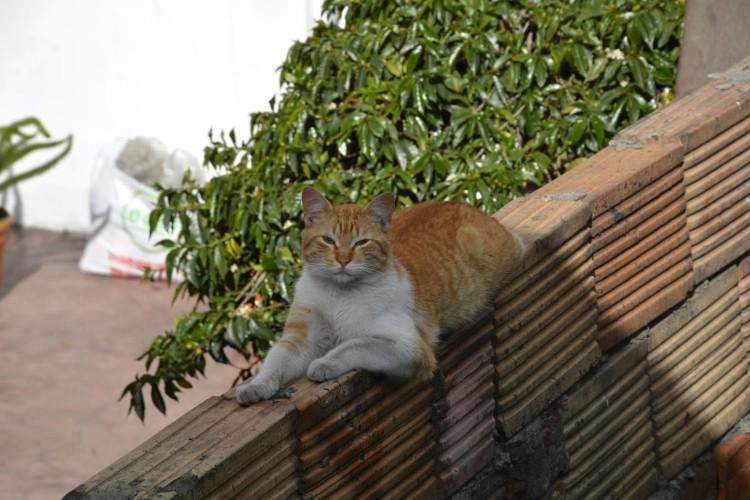 Saatchi Art Cat Jesùs Leguizamo