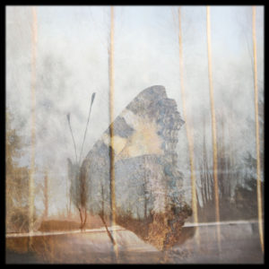 Final-Days-2-james-dooley-saatchi-art-butterfly-photography