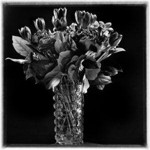 My-flowers-are-fading-away-frank-verreyken-saatchi-art-black-white-photography
