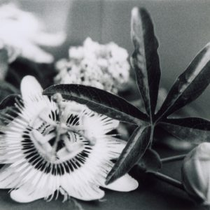 UNTITLED-Cristina-Stendardo-saatchi-art-balck-white-flower-photography