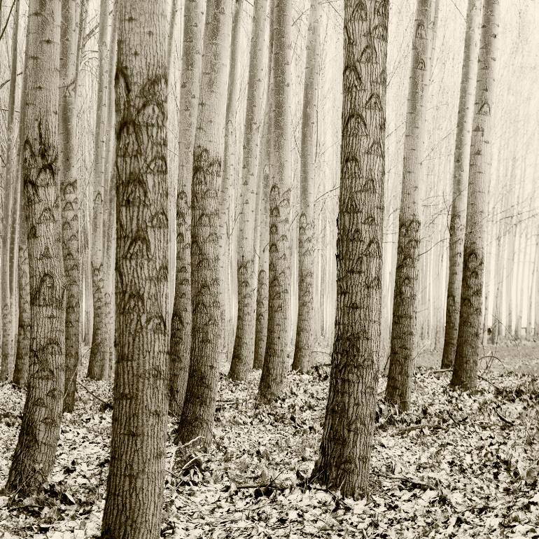 saatchi-art-mc-reardon-trees-art-photography